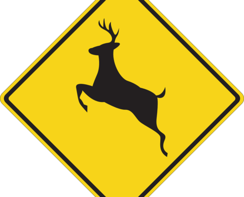 How to lower your risk for a deer collision in Santa Fe Springs, CA